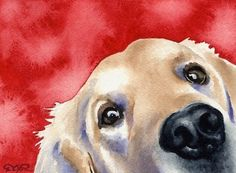 Watercolor art prints and originals by artist DJ Rogers by Labrador Retrievers, Retriever Puppies, Watercolor Animals, Watercolor Paintings, Watercolor Paper, Golden Retriever Kunst, Dog Signs, Dog Tattoos, Dog Portraits