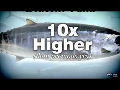 Fukushima   Radioactive Bluefin Tuna Found Off California Coast May 29, 2012)