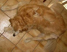 Plus de 1000 id es propos de amours de chats sur for Pipi de chien sur carrelage