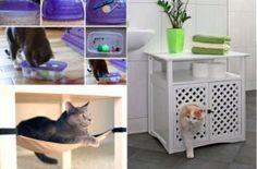 9 meilleures images du tableau apprendre des tours son chat. Black Bedroom Furniture Sets. Home Design Ideas