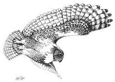 flying owl art - Поиск в Google