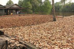 Proses pembuatan kopra di desa concong dalam