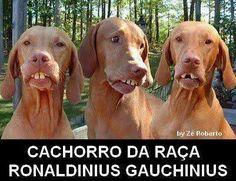 imagens engraçadas cachorro do ronaldinho gaucho