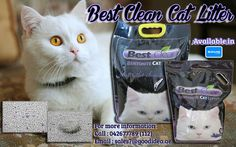 Looking for a Best Quality of Cat Litter? No more worries, BEST CLEAN CAT LITTER is worth for your cats and to your home. •SUPER STRONG CAKING ABSORPTION •ULTRA HYGIENIC  •EASY TO CLUMP •LONG LASTING SCENT It comes with 4 Fresh Scents : Lemon,Apple,Lavender and Original For affordable prices :) For more information: Call:042677789 loc 112 Email:sales7|@goodidea.ae ◘ We are open for those who have petshops,pet store and Good samaritans helping those stray with promotional offer ♥ Also…
