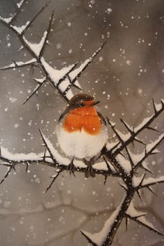European robin. A robin is one of the first birds to arrive after winter. The robin who shows the Pevensies the way in Narnia is the first sign that the White Witch's hold is loosening and the spring is on its way.