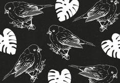 Pássaros P&B