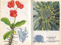 succulent.jpg (1280×948)