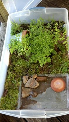 Turtle home- OH. MY. GWAD! This is perfect! I recommend this to ever single mice - rat pet owner!! Make a little forest for them to explore! And if you can put differnt plant/fake plant in every week for them to explore new stuff!!!