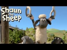 Shaun the Sheep - Championsheeps - Rings (OFFICIAL VIDEO) (+playlist)