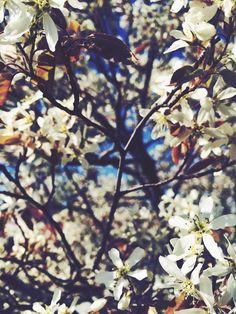 <3 Kirschblüten <3 Flora auf der Dachterrasse der LVZ Kuppelhalle.