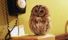 How I fell in love with an owl