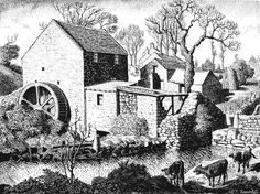 Tunnicliffe Society - Country Life Annuals Pen And Wash, Nature Artists, British Wildlife, English Artists, Black And White Drawing, Country Life, Art Images, Creative Art, My Drawings