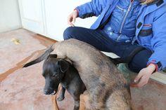 Dog puzzle / incastro canino