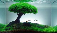 Paisajismo en acuarios plantados... Me encanta!!!!