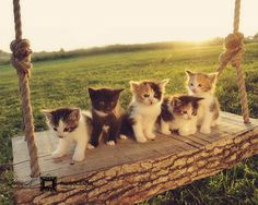 cats on a swing, it doesn't get any cuter.