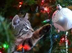 How to keep your cat off the Christmas tree