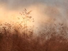 Camilla Noresson - Bara gräs. Hazy closeup of grass in dreamy orange. Available as poster and laminated picture at Printler, the marketplace for photo art.