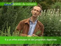 Les propriétés du Romarin - YouTube
