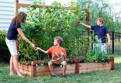 It is the prettiest solution for growing tomatoes I have seen! I will copy it for sure!