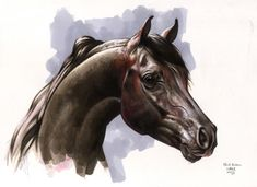 Horse Illustrations by Nicholas Mikesell