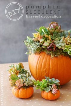 34 Pumpkin Decorations For Fall - Pumpkin Succulent Harvest Decoration - Easy DIY Pumpkin Decor Ideas for Home, Yard, Outdoors - Cool Pumpkin Decorating Ideas for Adults and Kids Party, Creative Crafts With Paint, Glitter and No Carve Projects for Halloween http://diyjoy.com/pumpkin-decorations-fall