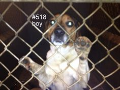 Logan County Pound WV...high kill shelter!! Please share! This young beagle is just waiting for a home!