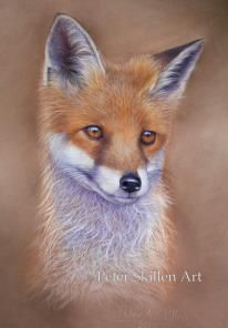 Fox cub.   pastel painting  https://www.facebook.com/PeterSkillenArt