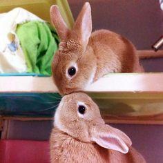 2 bunnies kissing! Awww!