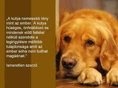Traiborg - Member Home Page Pet Dogs, Dogs And Puppies, About Me Blog, Life Is A Journey, Dog Quotes, Love People, I Love Dogs, Animals Beautiful, Animals And Pets