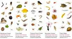 one cubic foot of biodiversity