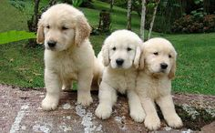 Cute puppy and dog - http://www.1pic4u.com/blog/2014/11/01/suesse-hundebabys-102/