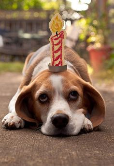 Make a Wish! I wish for all homeless and shelter pets to find homes....