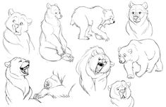 Concept art intern at Zynga, and senior vis dev student at the Academy of art in SF. Character Design Animation, Character Drawing, Character Illustration, Cartoon Drawings, Cartoon Art, Art Drawings, Drawings Of Bears, Animal Sketches, Animal Drawings