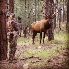 Really want to kill a bull elk with a bow! Big Game Hunting, Hunting Camo, Archery Hunting, Hunting Season, Hunting Stuff, Bow Hunting Women, Hunting Girls, Rifles, Bull Elk