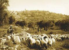 Bethlehem-بيت لحم: Bethlehem, early 20th c.