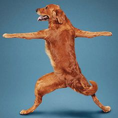 Meet the Yoga Dogs | Reader's Digest