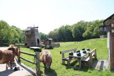 les poneys du char à bancs