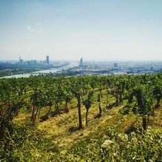 View of Vienna and some vineyards from Kahlenberg Street Photography, Travel Photography, Honeymoon Pictures, Danube River, Imperial Palace, Austria Travel, Best Travel Deals, Tourist Information, Vienna