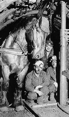 Caballo y mineros