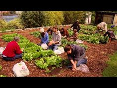 Small Business Idea Growing Herbs for Health and Profit