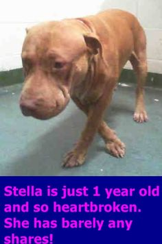 ADOPTED! STELLA (A1720526) I am a female tan Pit Bull Terrier mix. The shelter staff think I am about 1 year old and I weigh 62 pounds. I was found as a stray and I may be available for adoption on 08/28/2015. Miami Dade https://www.facebook.com/urgentdogsofmiami/photos/pb.191859757515102.-2207520000.1440595574./1033272580040478/?type=3&theater