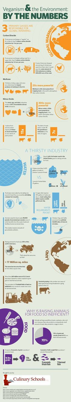 A graphic look at the amount of water and fuel it takes to raise animals for food versus the amount it takes to raise plants for food, plus additional environmental information, may just have you rethinking your meat consumption.