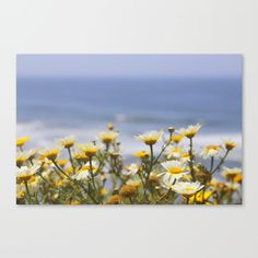 ocean and daisies Canvas Print