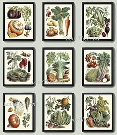 Vegetable Print Set of 9 Art Prints Antique Beautiful Eggplant Pumpkin Cabbage Brussels Sprout Tomato Onion Carrot Green Vegeterian Garden Nature Home Room Decor Wall Art Unframed LPP. Beautiful set of 9 prints based on antique botanical illustrations from 1850. Wonderful details, colors and natural history feel. • The prints measure 4x6, 5x7, 8x10, or 11x14 inch. based on your selection come with a white border for easy framing. • Printed on professional artist archival matte paper. •…