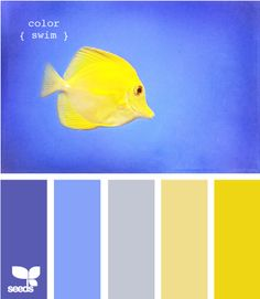 color swim - Love these colors.  I use them all over my house.  Well, the yellow isn't quite the bright one...