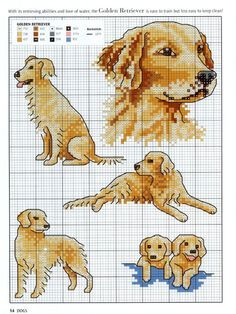 Thrilling Designing Your Own Cross Stitch Embroidery Patterns Ideas. Exhilarating Designing Your Own Cross Stitch Embroidery Patterns Ideas. Cross Stitch Cards, Cross Stitch Animals, Cross Stitching, Cross Stitch Embroidery, Embroidery Patterns, Cross Stitch Designs, Cross Stitch Patterns, Golden Retriever Cross, Golden Retrievers