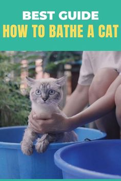 Cats and water, that's far from being a love story! While some cats enjoy the water – or at least aren't afraid of it – most of them just at the sight of the running bathwater, they can run away for miles. How can you clean your cat without scratches? Check our tips including step by step guide how to bathe a cat. Click to read more! #catbath #catcare #cathealth #healthycat #cattips