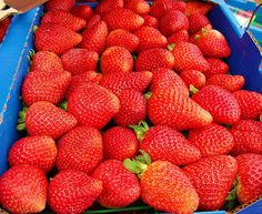 Santa Maria Valley, California. My hometown is best known for the World's Best Strawberries.