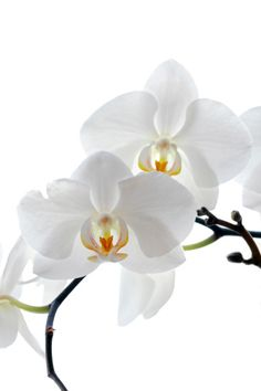composition de fleurs artificielles orchid es h 45 cm 2 vases atmosphera la redoute. Black Bedroom Furniture Sets. Home Design Ideas