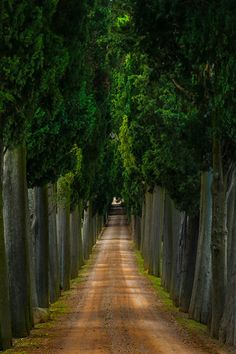 Tuscan Path - Val d'Orcia Region, Tuscany, Italy